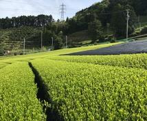 農業関係・お茶関係の記事書きます 農業についてお茶についての記事は任せてください!