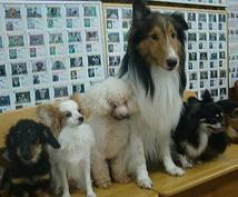 「愛犬との暮らし」本当にそれで大丈夫??実績関東No1のWANPOがアドバイス(#^.^#)