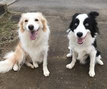 アニマルコミュニケーション☆ペットの通訳します 愛犬、愛猫、小動物など大切な家族の一員とお話してみたい方に