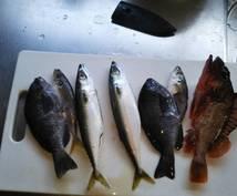 海釣りで絶対に釣れる仕掛けを教えます 初心者をどっぷりハマらせたい人向け