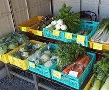 新鮮なお野菜が無料でもらえちゃいます 【産地直送】規格外の朝採れ新鮮野菜が無料でいただけます!!