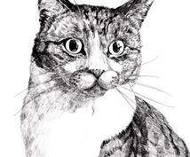 【クオリティ高め】あなたが飼っているペットの写真を元にデッサンをします。
