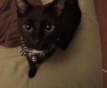 猫ちゃんのケア方法や対処法をアドバイスします 猫ちゃんの健康チェックを知りたい方へ