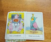 カードからワンポイントメッセージもらいます 現状に対してのひとことメッセージ的な