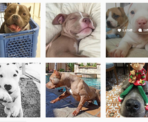 Instagramであなたの写真・動画を投稿します フォロワー200千人!犬テーマのインスタグラムPRにオススメ
